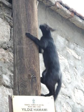 Die Hamam Katze