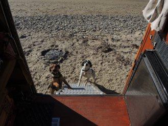 Finikounda Hunde (11)