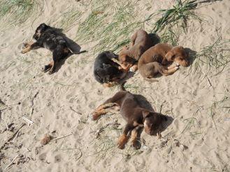 Finikounda Hunde (14)