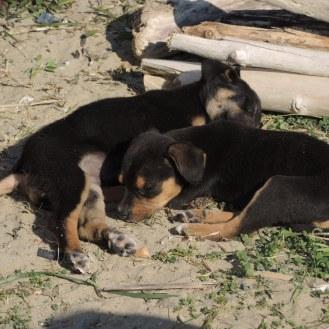 Finikounda Hunde (16)