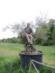 Im Olivenbaum
