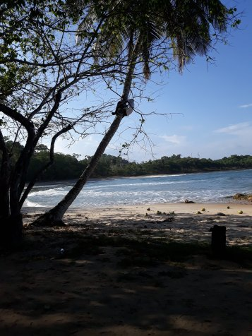 07 bon arrivee kokosnussklettern5555695502029549554..jpg